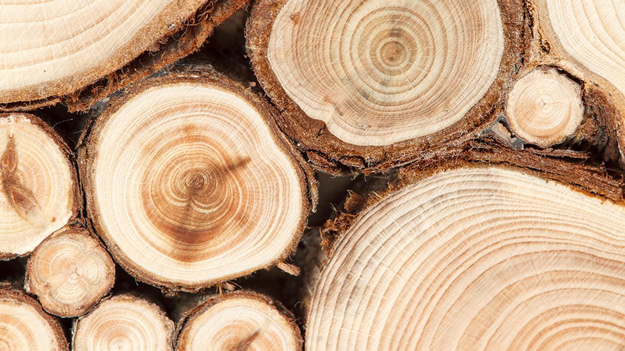 """""""Żadna polska firma nie wytrzyma takiego poziomu cen"""". Branża apeluje o zakaz eksportu drewna"""