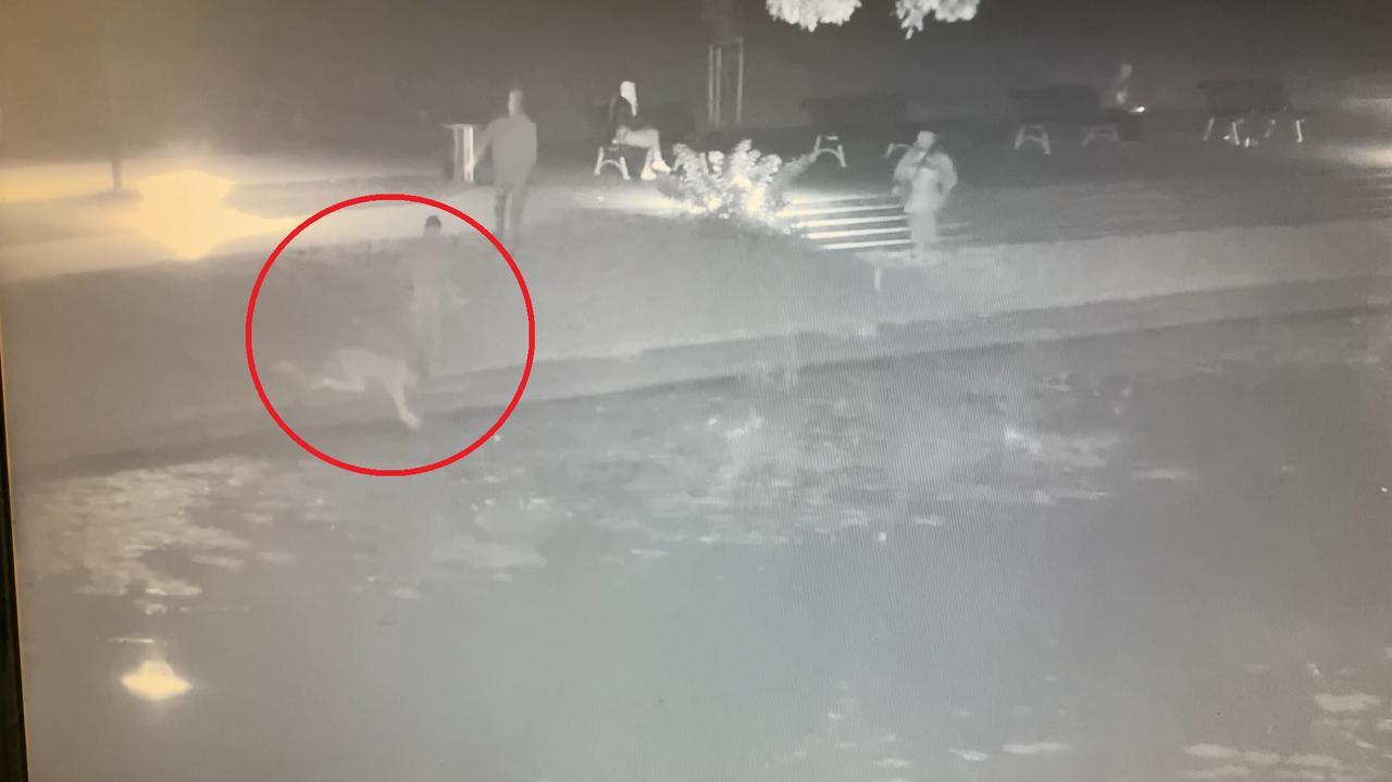 Kot wpadł do wody, ruszyli mu na ratunek. Burmistrz chce ich odnaleźć i podziękować