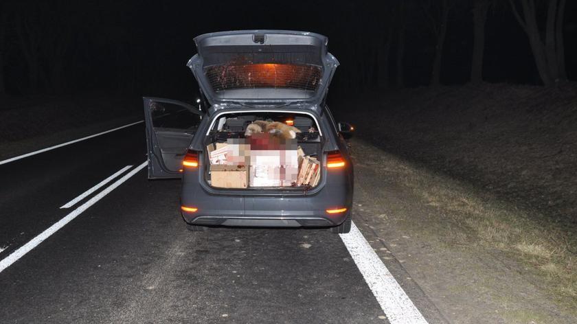 Sarna wylądowała w bagażniku