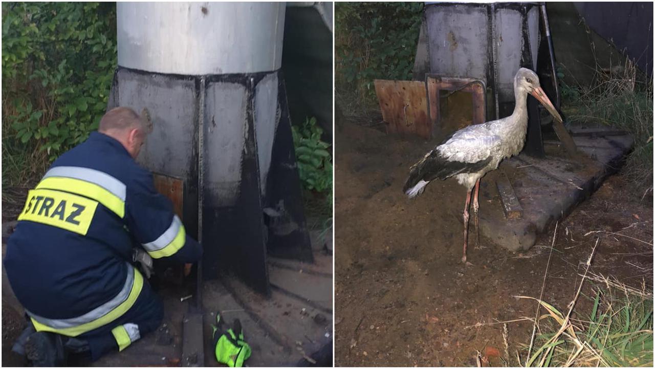 Bocian wpadł do 15-metrowego komina. Uratowali go strażacy