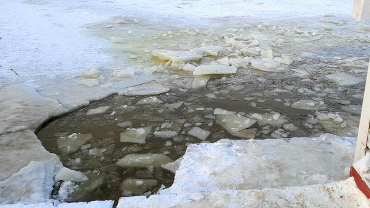 Załamał się pod nimi lód, morsy ruszyły na pomoc