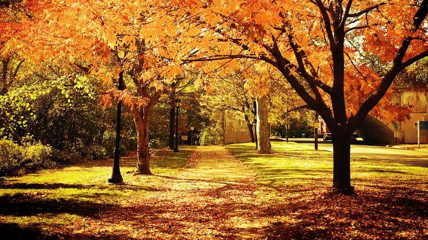 Powitaliśmy jesień