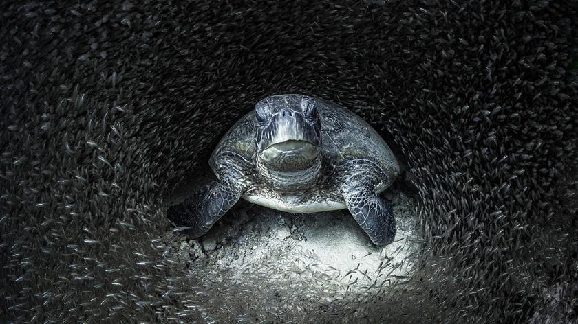 Zdjęcia nagrodzone w konkursie Ocean Photographer of the Year 2021