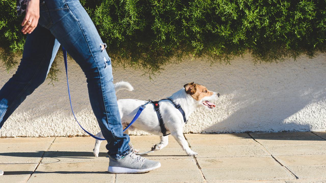 Wyższe mandaty za spacer z psem. Nowe przepisy weszły w życie