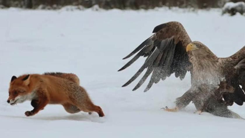 Puszczańskie zwierzęta w zimowej odsłonie