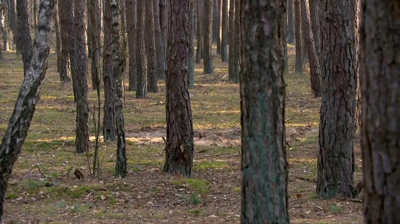 W lesie znalazł ciało młodego mężczyzny z raną kłutą.