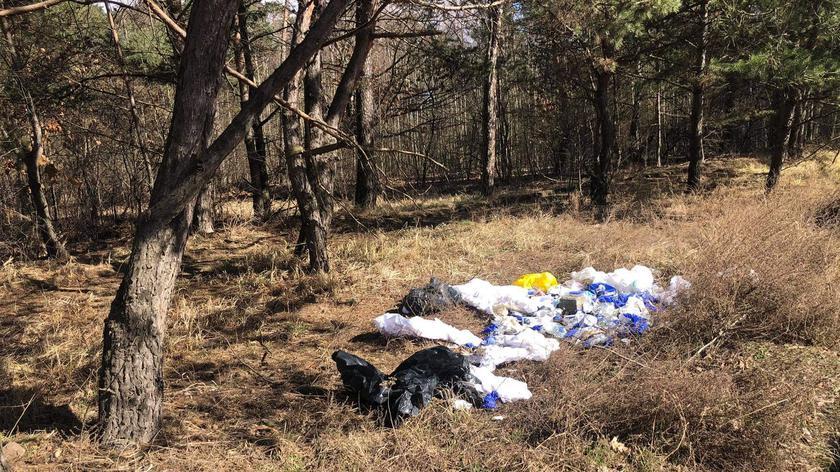 Odpady medyczne na skraju lasu w Poznaniu