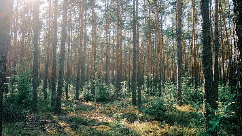 Głosowanie komisji środowiska i gospodarki w sprawie pierwszego czytania poselskiego projektu noweli ustawy o lasach