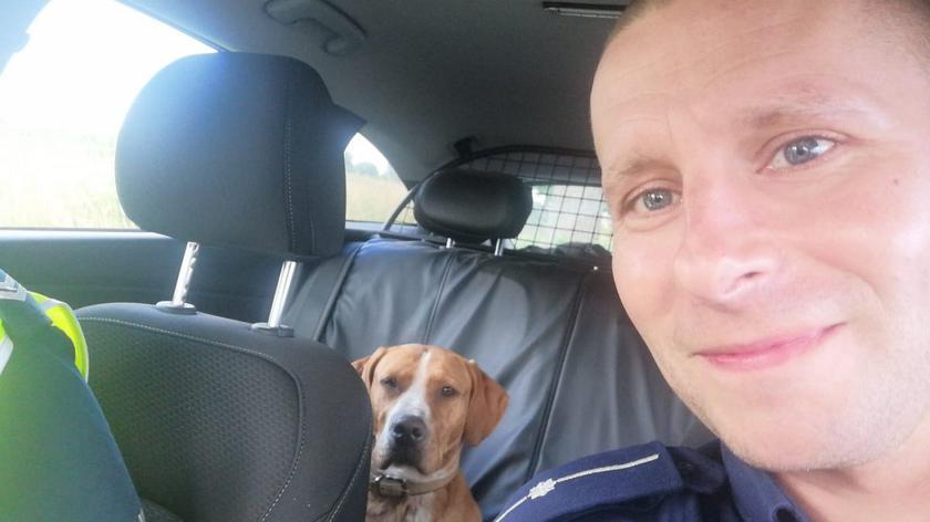 Policjanci pomogli psom błąkającym się obok drogi
