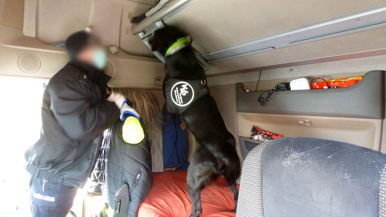 Labrador Carlos wywąchał paczki z heroiną warte ponad sześć milionów złotych. Osiem osób z zarzutami