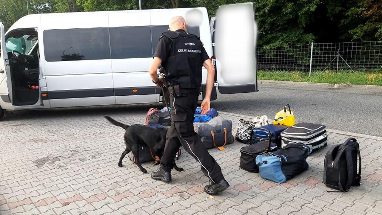 Narkotyki w bagażu wracających z Holandii. Pies Hunter wywąchał marihuanę i haszysz