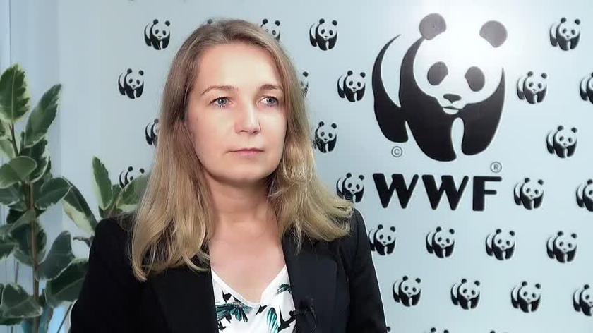 WWF: handel dziką przyrodą to czwarty najbardziej zyskowny czarny rynek na świecie