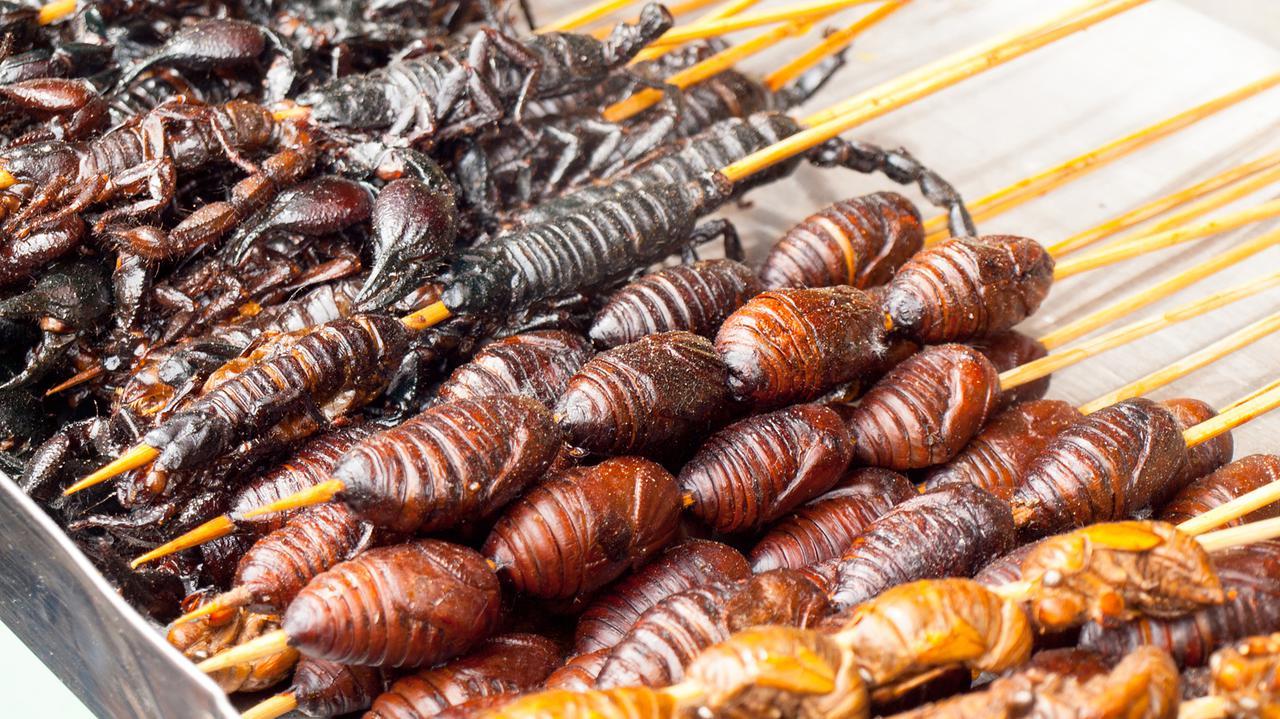 Studenci z Wrocławia hodują owady. Będą je mrozić, prażyć i badać wartości odżywcze