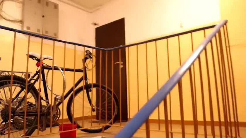 Nietoperze na klatce schodowej. Ekspert radzi co robić
