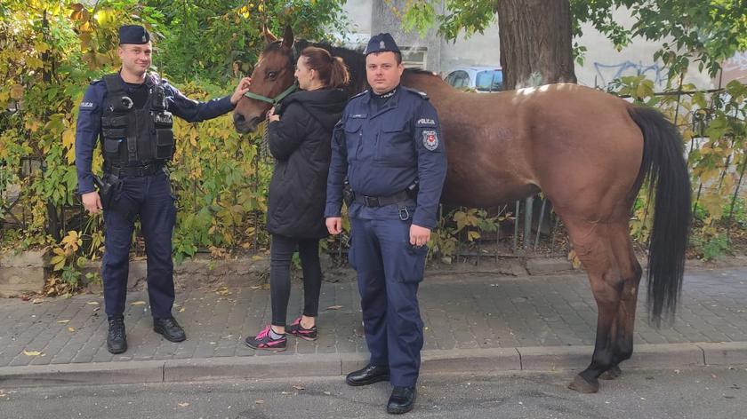 Lublin. Po centrum miasta biegał koń. Złapali go policjanci