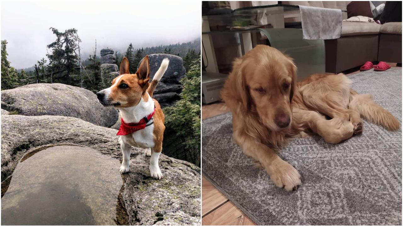 Gucio zniknął na 32 dni, w tym czasie jadł tylko śnieg. Diego znalazł go w ostatniej chwili