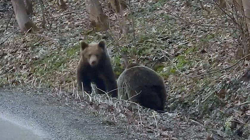 Polish Forestry Service published a video showing bears that had awakened after winter hibernation