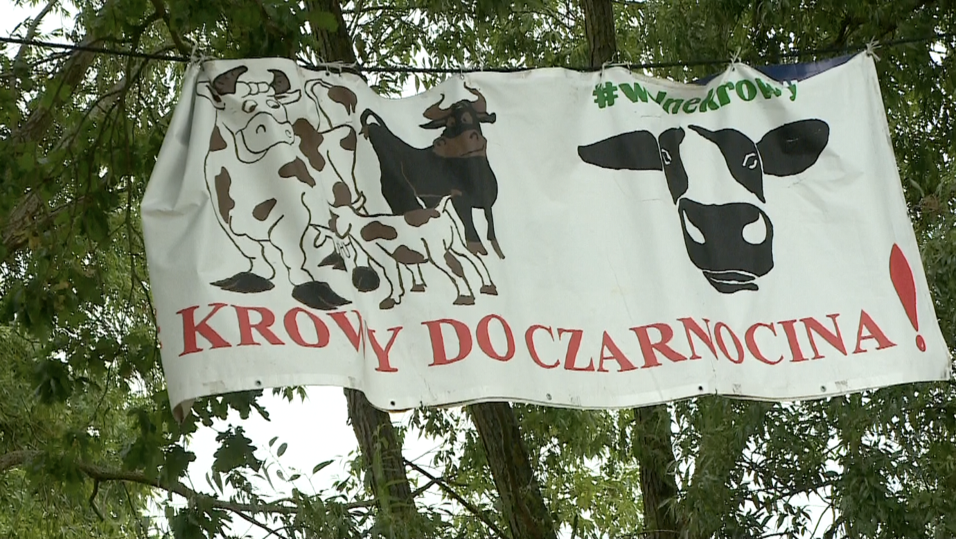 Kobiety, Czarnocin, dzkie, Polska, 1-99 lat | binaryoptionstrading23.com