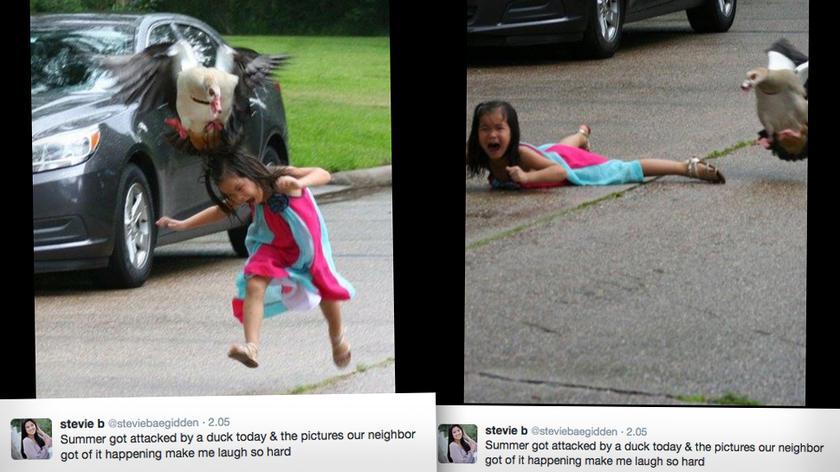 Gęś zaatakowała dziewczynę