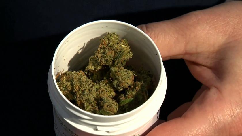 Policja zarekwirowała mężczyźnie zakupioną na receptę medyczną marihuanę