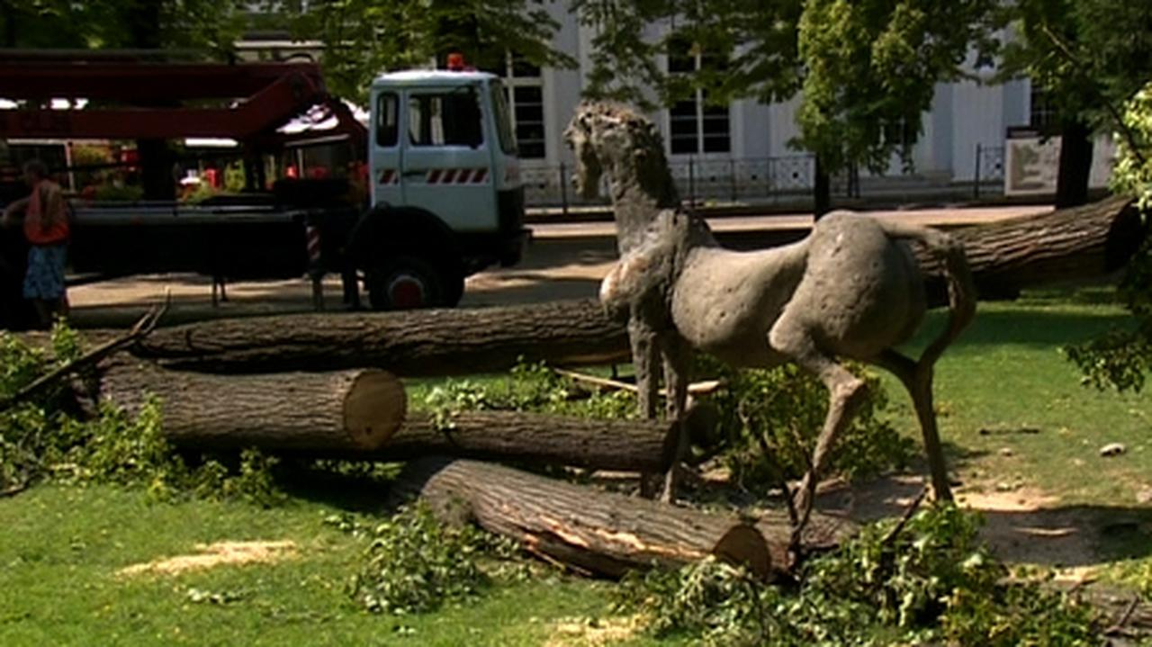 Czteroletnią Olę śmiertelnie przygniotło drzewo. Wyrok sądu