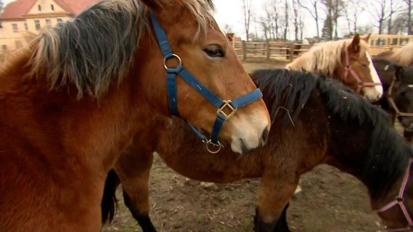 Fundacja Tara ocaliła kilkadziesiąt koni przed rzeźnią