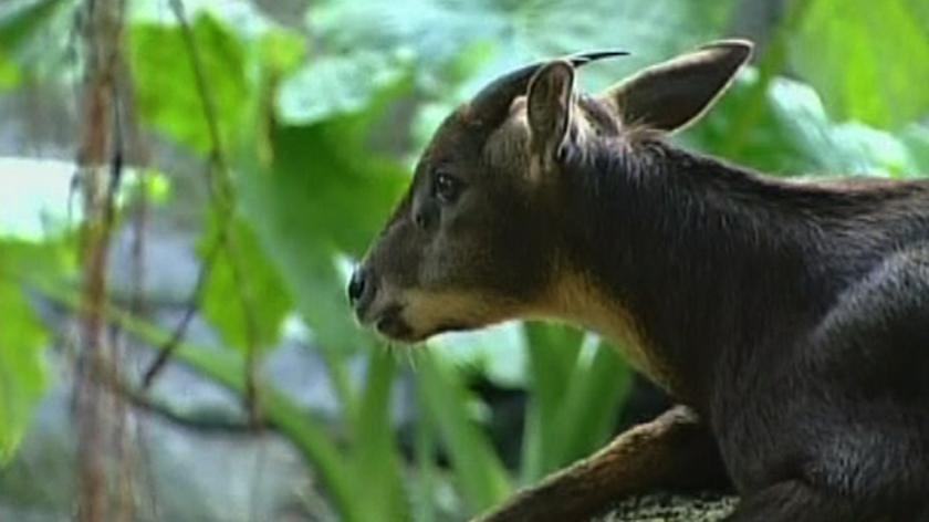 Koza - symbol pojednania