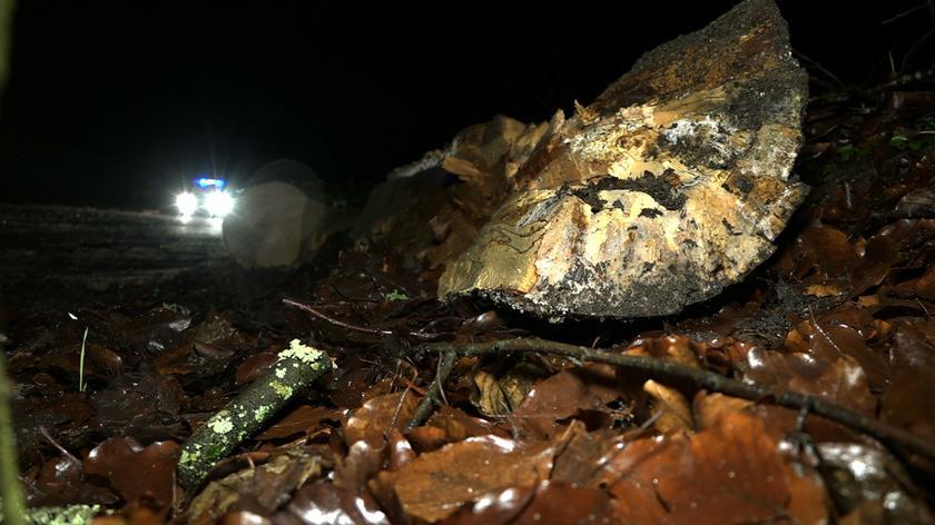 Tragiczny wypadek na Pomorzu. Chłopiec zginął w aucie, na które spadło drzewo