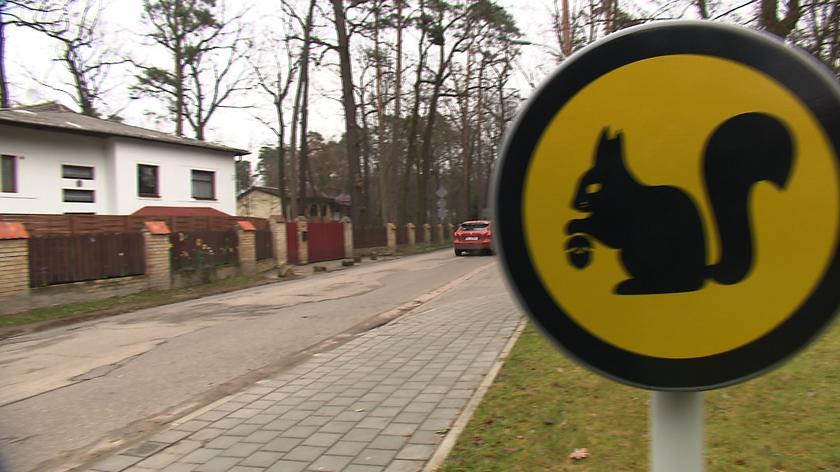 Kierowco, uważaj na wiewiórki i jeże
