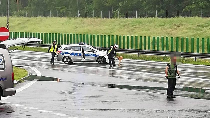 Policjanci i strażacy eskortowali konie na autostradzie A4