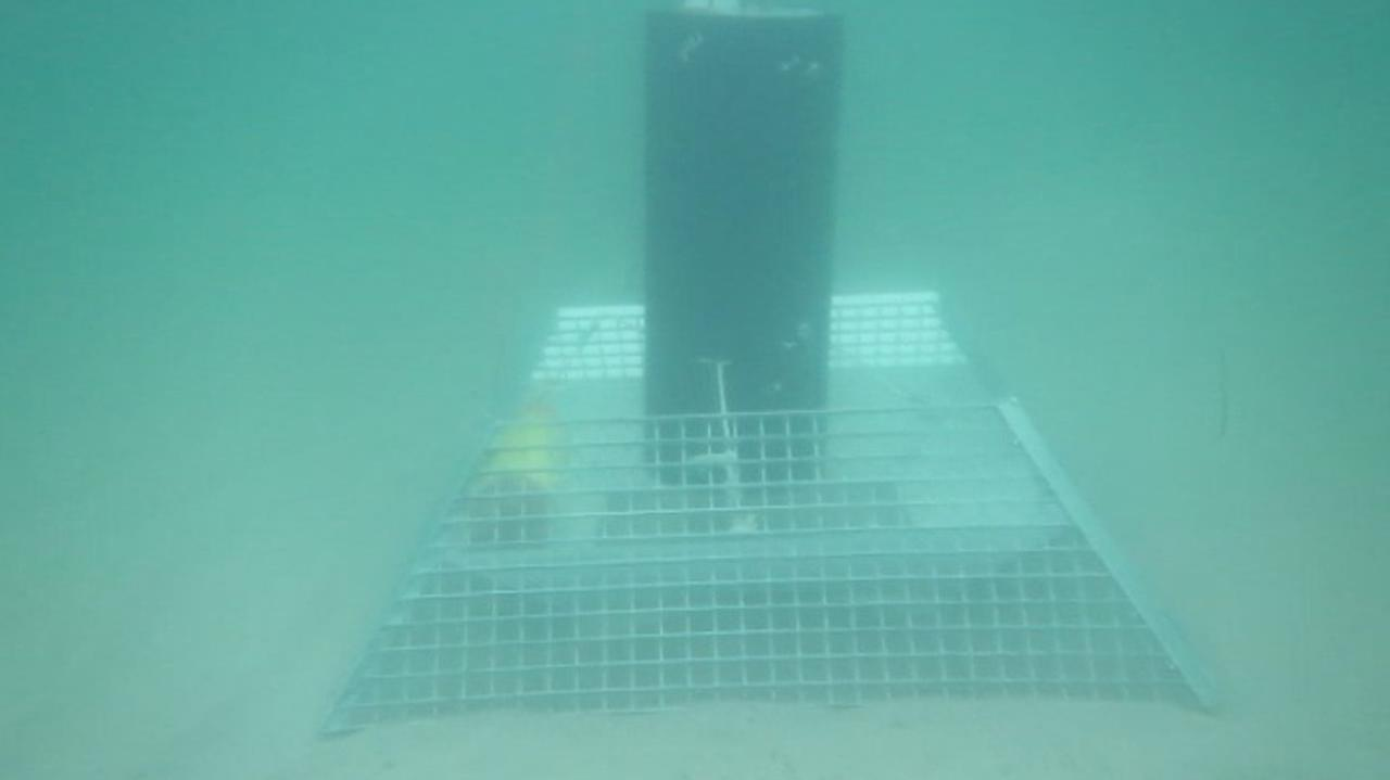 Hałas w morskich głębinach. Tylko dlaczego ten dźwięk przypomina szorowanie gwoździem po blasze? (NAGRANIA)