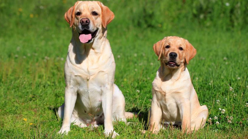 Opracowano metodę, jak obliczyć wiek psa