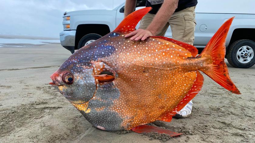 Ryba wyrzucona na brzeg w Oregonie