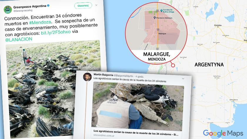 Dziesiątki martwych kondorów w Andach