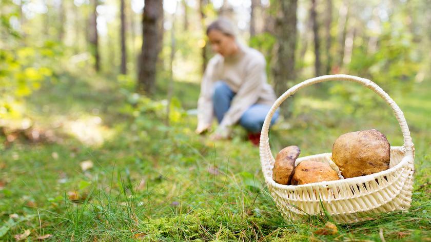 Zagraniczne grzyby mogą wyprzeć rodzime gatunki