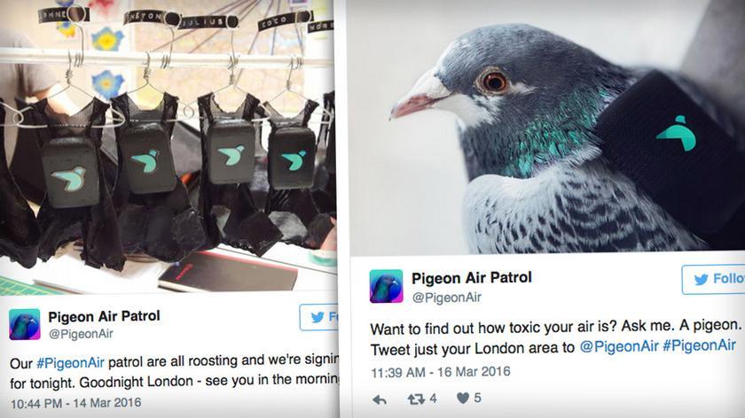 Gołębie w służbie jakości powietrza