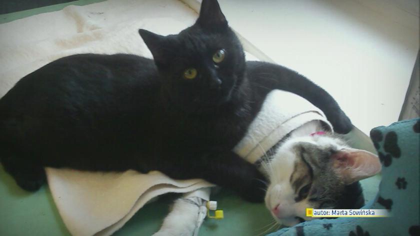 Kot zajmuje się chorymi zwierzętami