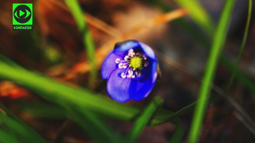 Nadejście wiosny w obiektywie Reporterów 24
