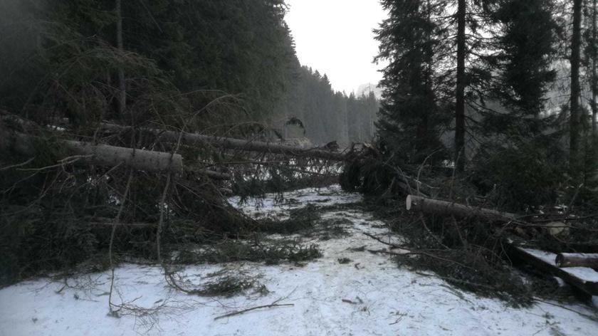 Powalone drzewo na drodze do Morskiego Oka