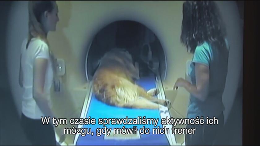 Psy rozumieją ludzką mowę