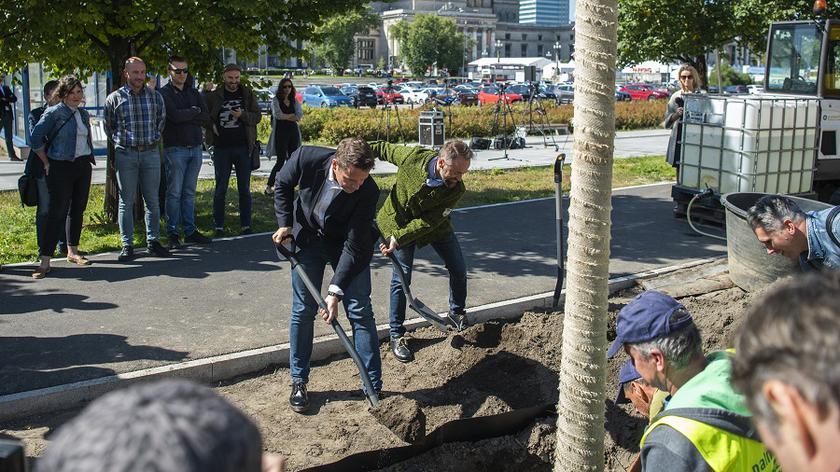 Do końca roku w centrum stolicy zostanie posadzonych 118 drzew