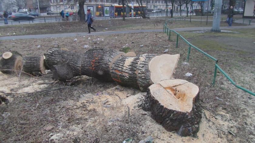 """Wycinka drzew pod budowę """"Czerniakowskiej bis"""""""