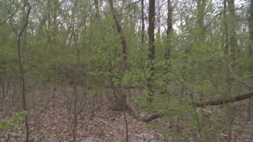 Planowana jest wycinka nawet tysięcy drzew