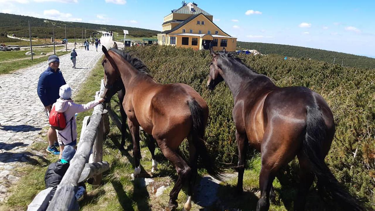 Ktoś wypuścił konie z pastwiska. Trzy klacze odnalazły się pod Śnieżką