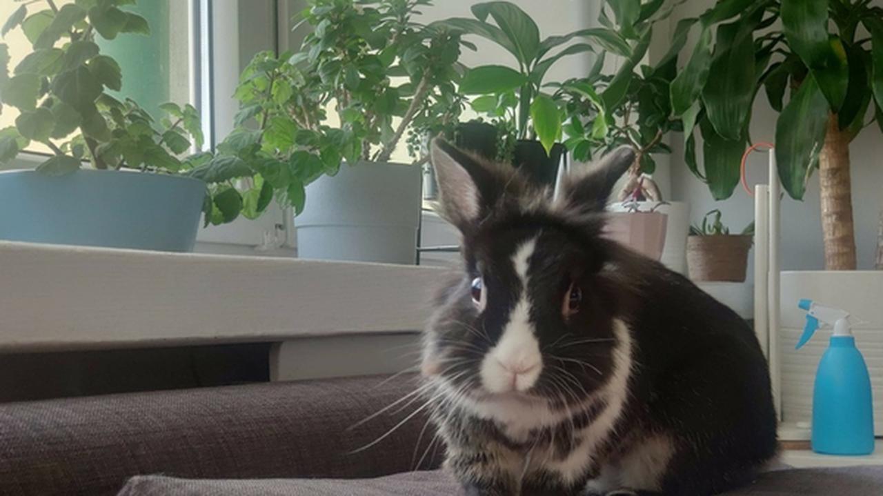 Wyrzucił królika przez okno, bo