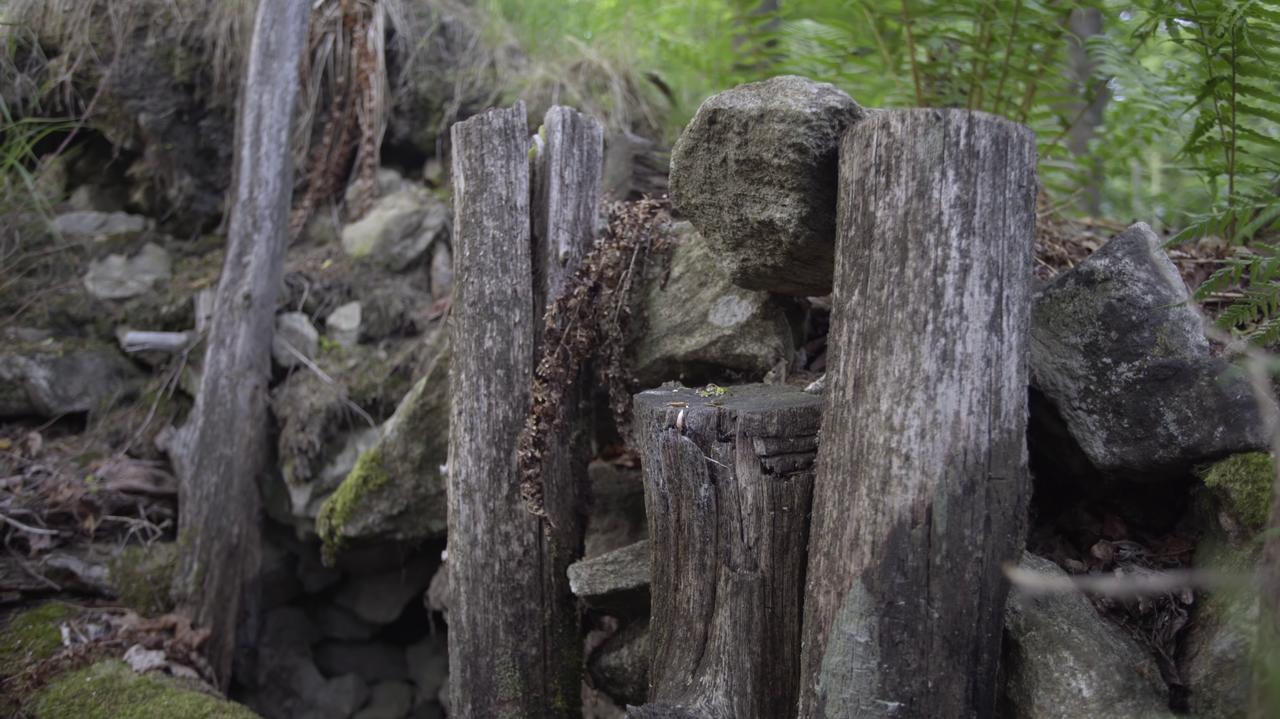 Rozkopana leśna skrytka.